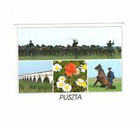 AK Ansichtskarte Pferde in der Puszta / Ungarn