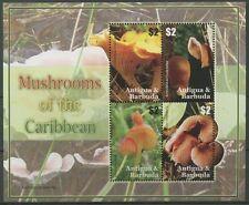 antigua ca 2007 champignons mushrooms pilze fungi mycena auricularia peziza ms 4