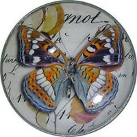 Crystal Dome Button Moth on Leaf wPaper  BUG9 FREE US SHIPPING