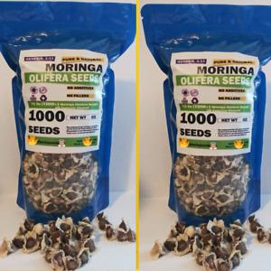 Moringa seeds 1000+ seed semillas de moringa FRESH 100% (wesell RAIZ DE TEJOCOTE