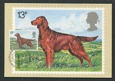 GB UK MK 1979 HUNDE IRISH DOGS SETTER CARTE MAXIMUM CARD MC CM d6279