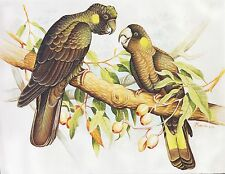 Hand painting Balinese Parrots Birds 319