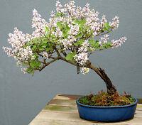 Abono orgánico bonsai Hanagokoro 5 bolitas aprox 14mm Ø liberacion lenta