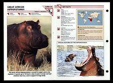 """AFRICAN HIPPOPOTAMUS"" WILD LIFE FACT FILE ANIMAL INFO-CARD/HOME SCHOOL STUDY"