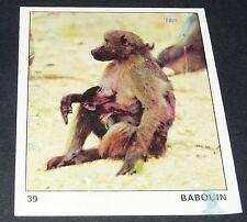 N°39 SINGE BABOUIN PANINI 1970 TOUS LES ANIMAUX EDITIONS DE LA TOUR