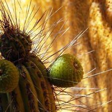 Peat Full Sun Dry Climate Plants & Seedlings