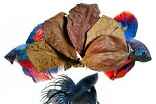"10 Indian Almond Leaves 7-9""  Cattappa Ketapang for betta Fish, Shrimp, Aquarium"