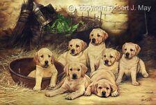 Original Yellow Lab Pup Painting by Robert J. May