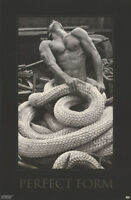 POSTER :PERFECT FORM : TODD FOURNIER SEXY MALE MODEL - FREE SHIP !  #9038 RC47 i