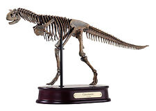 Carnotaurus Dinosaur Skeleton Replica Model 1/20 Scale
