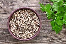 GRAINES CORIANDRE- Sachet de 6 grammes adapté à un jardin familial