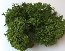 DARK GREEN Reindeer Moss Cladonia Tillandsia air plant house vivarium wood
