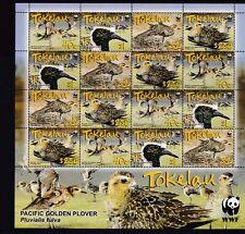 TOKELAU MNH  SHEET 2007 PACIFIC GOLDEN PLOVER SG 382-385