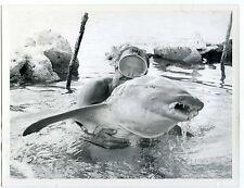 Ateliers d'Arts graphiques de TAHITI un nageur avec un poisson requin curiosa