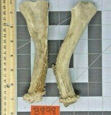 2 Real Whole (Unsplit) Mule Deer Antler Bone Dog Chew Toy & Dental Treat Lot
