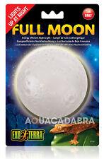 EXO TERRA FULL MOON LAMP 1W ENERGY EFFICIENT NIGHT LIGHT FOR REPTILE VIVARIUM
