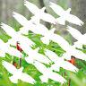 16 Pegatina Tatuaje 10cm Blanco Pájaro Ventana Alertas Aves