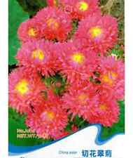 Red Cut Flower Callistephus Flower Seed China Aster ~1 Pack 50 Seeds~