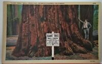 "Vintage postcard. ""Giant Tree"", Bull Creek Flat, Redwood Highway, California."