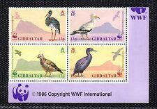 Gibraltar Fauna Aves serie del año 1991 (BL-391)