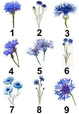 Cornflower Small Or Large Sticky White Paper Stickers Labels New