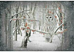 "Birch Call of the Wild Owl Digital Panel Hoffman Cotton Fabric 31"" x 44"""