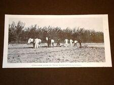 Pavia nel 1905 Insediamento agrario nel presidio militare