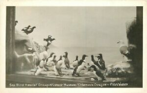 Taxidermy Diorama Sea Bird Habitat Tillamook Oregon RPPC Photo Postcard 21-2216