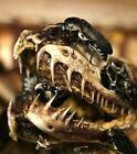Skull Creation's 5,000+ Dermestid Beetle Colony European Mount Taxidermy Beetles