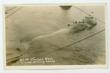 Whale Trinidad Whaling station Finnback    vintage RPPC Real Photo Postcard