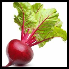 Ruby Queen Beet Seeds | Vegetable Seeds for Planting Home Gardens | Non-Gmo