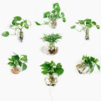 Irregular Wall Hanging Glass Planter Air Plant Terrarium Flower Pots Vase 2 L4Y9