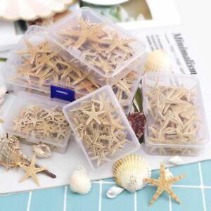 Natural Beach Starfish Craft Sea Stars DIY Seashell Wedding Box Home Decoration