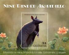 Grenada  2019  fauna nine banded armadillo I201903