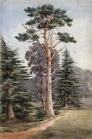 TREES IN LANDSCAPE POSSIBLY STAGBURY Antique Watercolour Painting - 19TH CENTURY