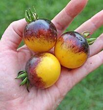 Tasty  25 Bumble Bee Tomato  Seeds Super Grade Non Gmo Heirloom Vegetable1