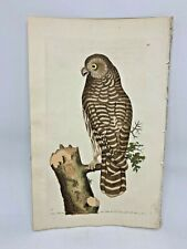 Horned & Clouded Owl - 1783 RARE SHAW & NODDER Hand Colored Copper Engraving