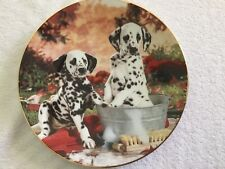 "New ""You Missed A Spot"" Dalmatian Ltd Ed Hamilton Collection Plate"