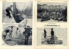 Krevettenfang *Garnelen, Granat, Kroat, Porre, Krabbe* Text-& Bilddokumente 1906