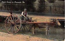 1914 Ox Cart Rapid Transit in Pensacola FL post card
