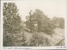 Allemagne, Vue des arbres, 14 octobre 1928, vintage silver print Vintage silver