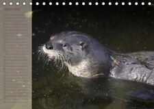 Kalender immerwährender DIN A5 Fischotter Geburtstagskalender Querformat Otter..