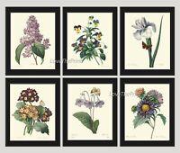 Unframed Botanical Print Set of 6 Antique Lilac Iris Plants Flowers Wall Art