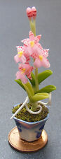 1:12 Pink Madam Panny Orchid In A Pot Dolls House Miniature Flower Accessory 4