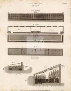 GARDENING Hot-House - Rees's Encyclopedia Vintage Print #G253