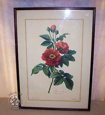 Antique Litho Print-FLOWER-PROVINS ROSE-ROSA GALLICA-Spaendonck-Godefroy-1801