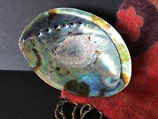 Vintage Polished New Zealand Paua Shell …beautiful display piece
