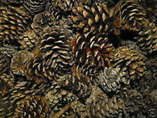 BAG OF 24 ROCKY MTN PINECONES~GREAT 4 CRAFTS & DECOR!!!