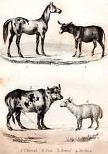 Original Buffon 1853 Antique Natural History Print Horse Donkey Cow