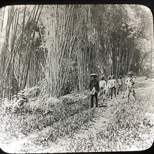 Antique Keystone Magic Lantern Glass Slide Photo Bamboo Jungle In Java